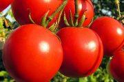 چه کسانی نباید گوجه فرنگی بخورند؟